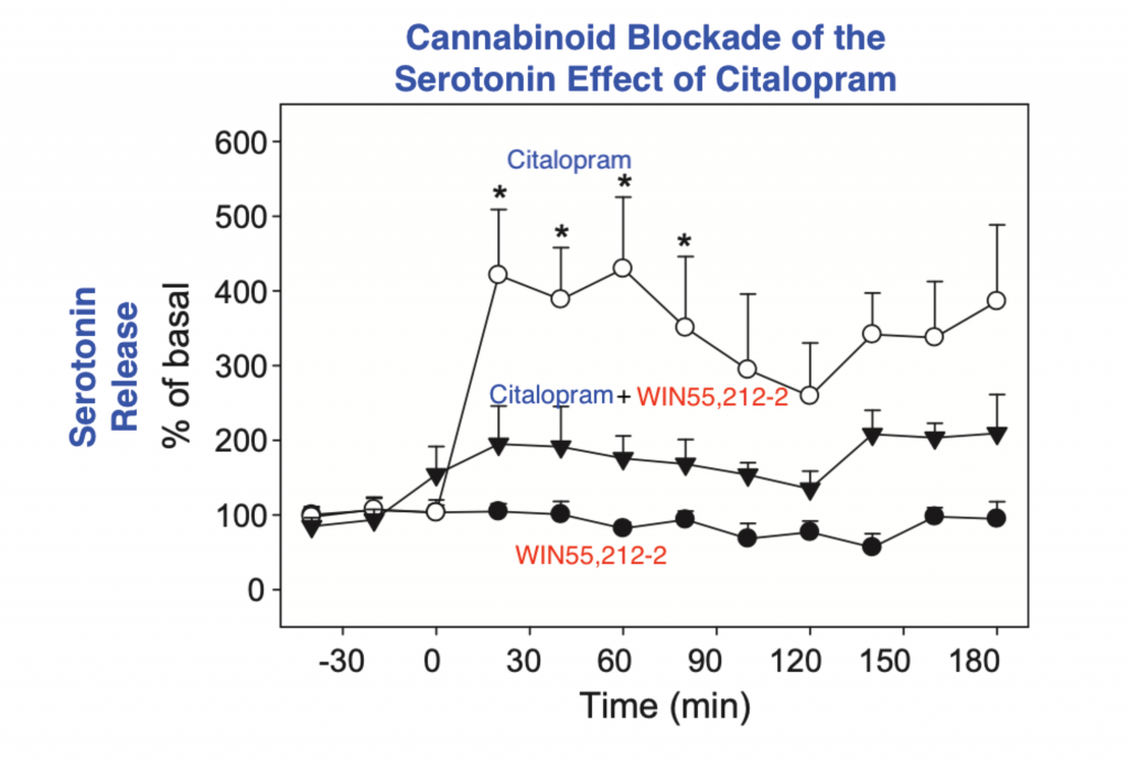Line graph of cannabinoid blockade of the serotonin effect of citalopram